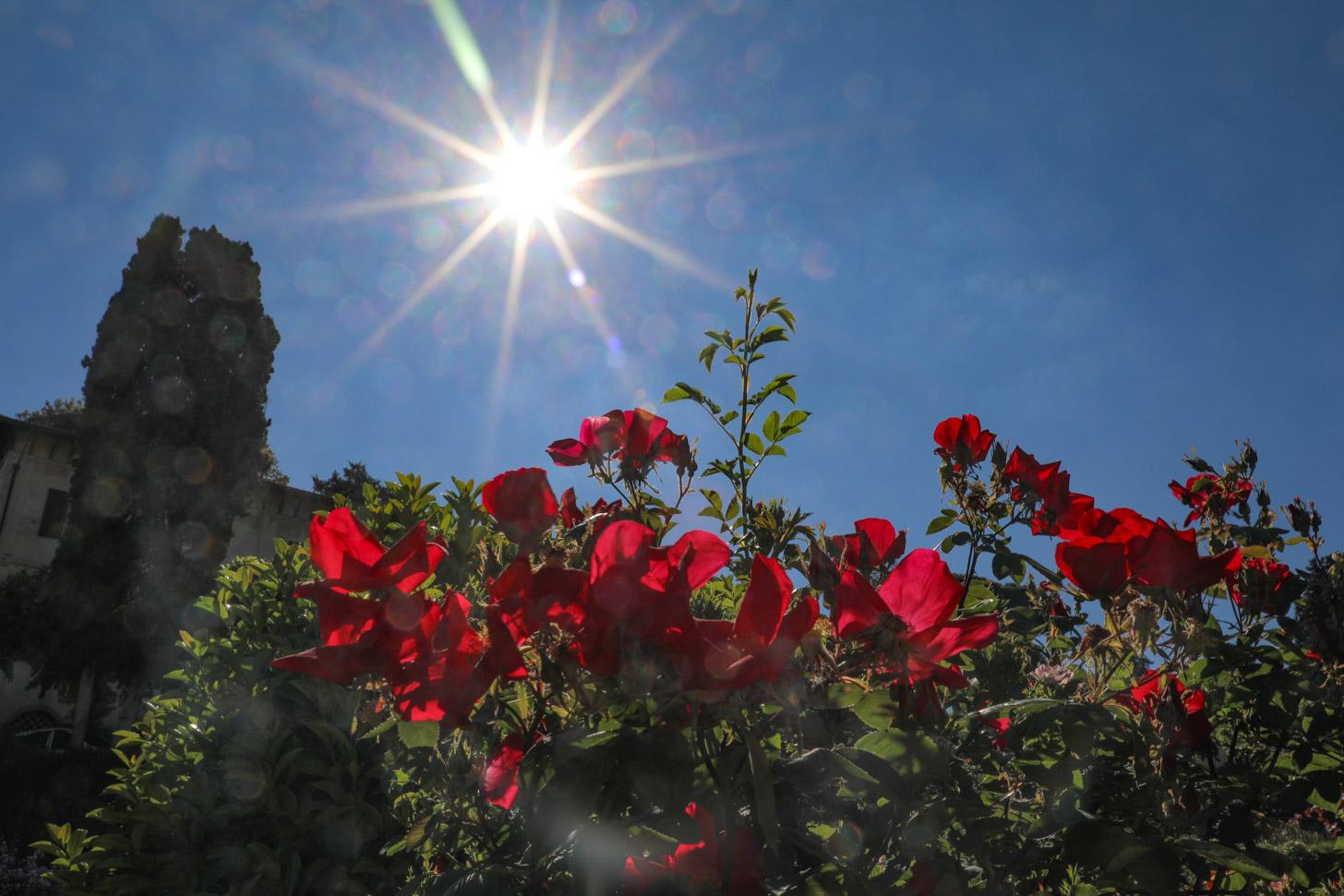 Heerlijke zomers